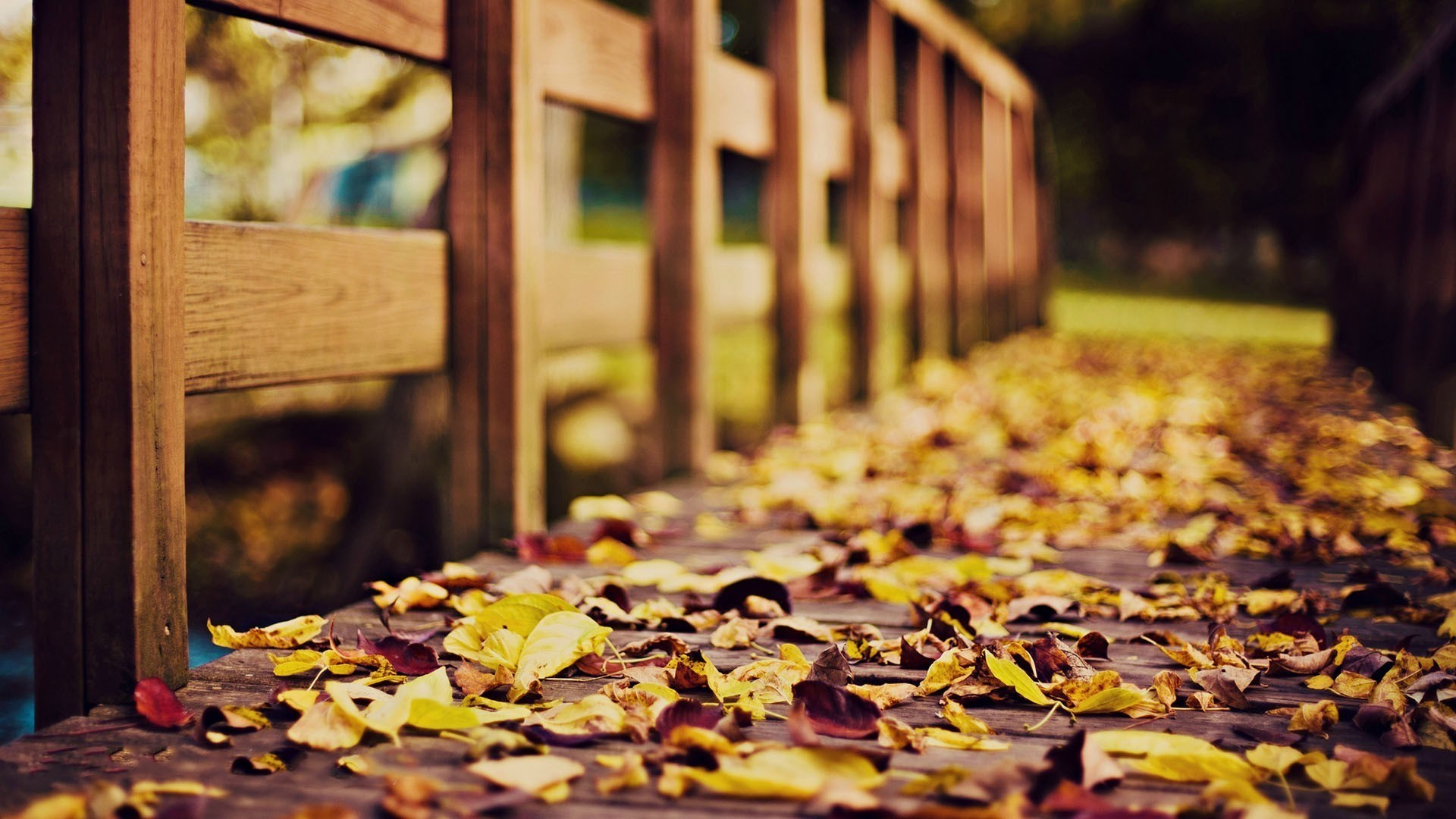 Falling Leaves Wallpaper For Iphone Autumn Full Hd Wallpaper And Background 1920x1080 Id