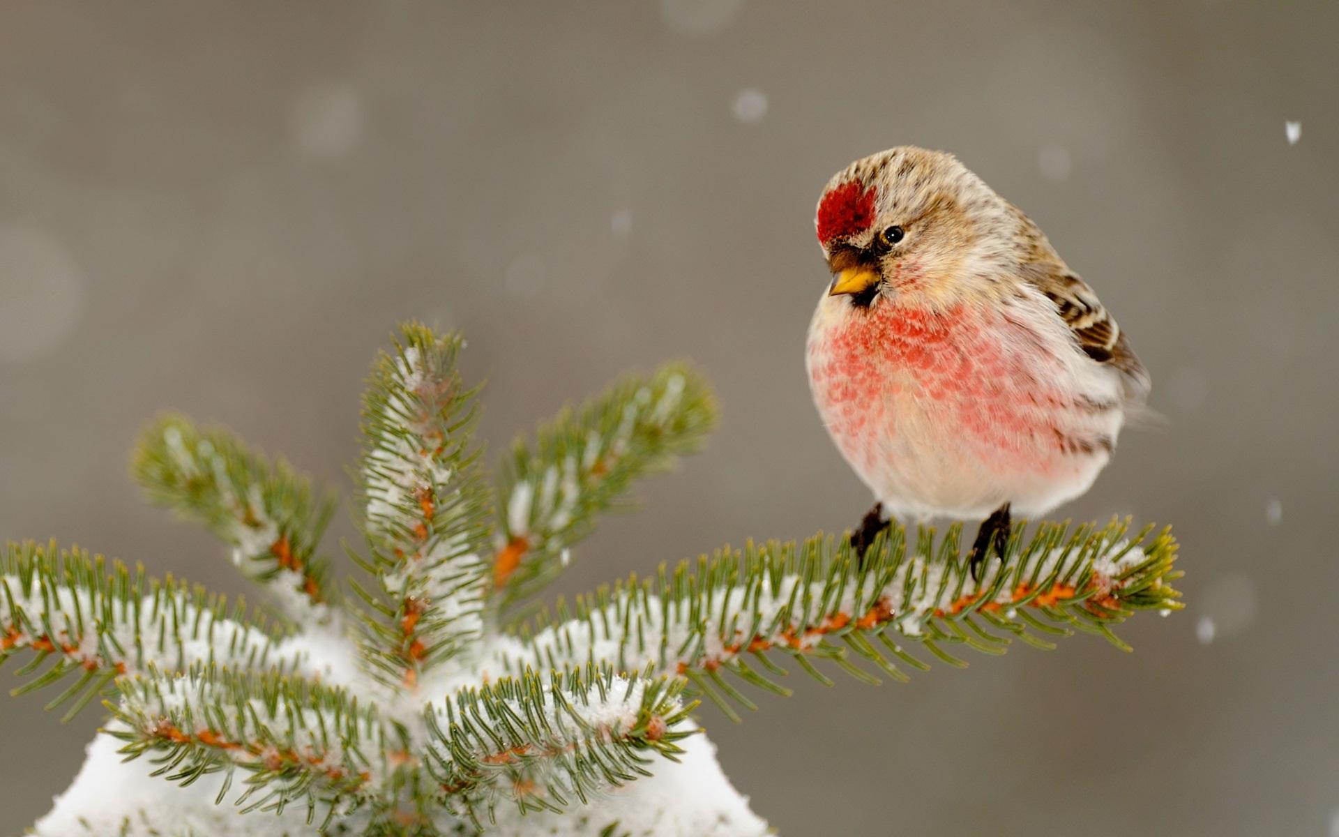 Falling Snow Wallpaper Iphone 5 Bird Full Hd Wallpaper And Hintergrund 1920x1200 Id 476028