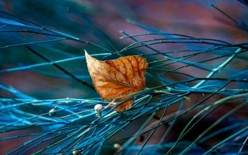 Drop Of Water Falling From A Leaf Dark Background Wallpaper 1361 Leaf Hd Wallpapers Background Images Wallpaper Abyss