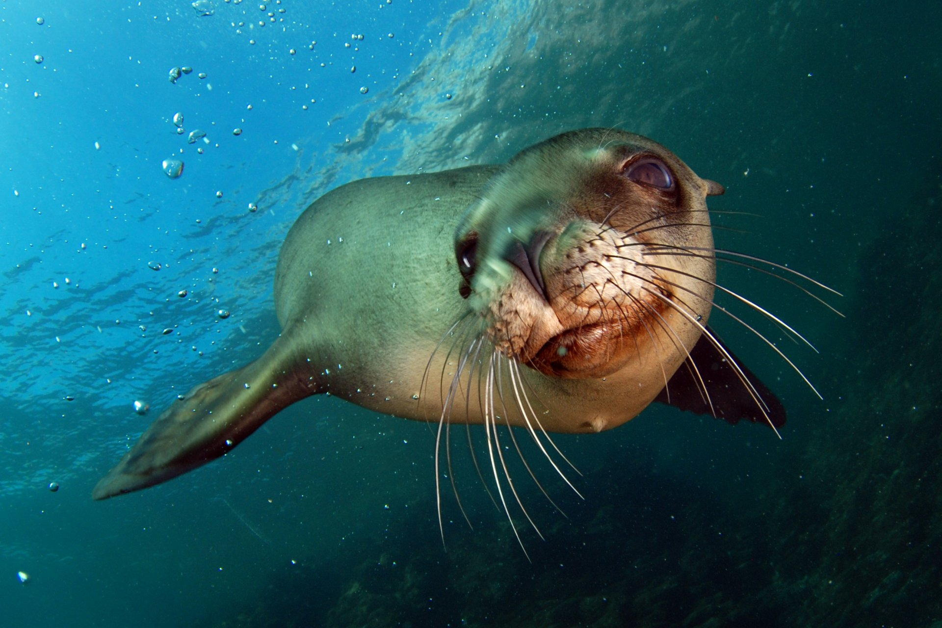 Cute Turtle Wallpaper For Iphone Sea Lion Full Hd Wallpaper And Background Image