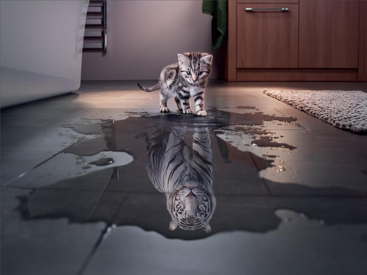 Cute Kitten Wallpaper For Ipad Animal Cat Funny Cute White Tiger Tiger Kitten