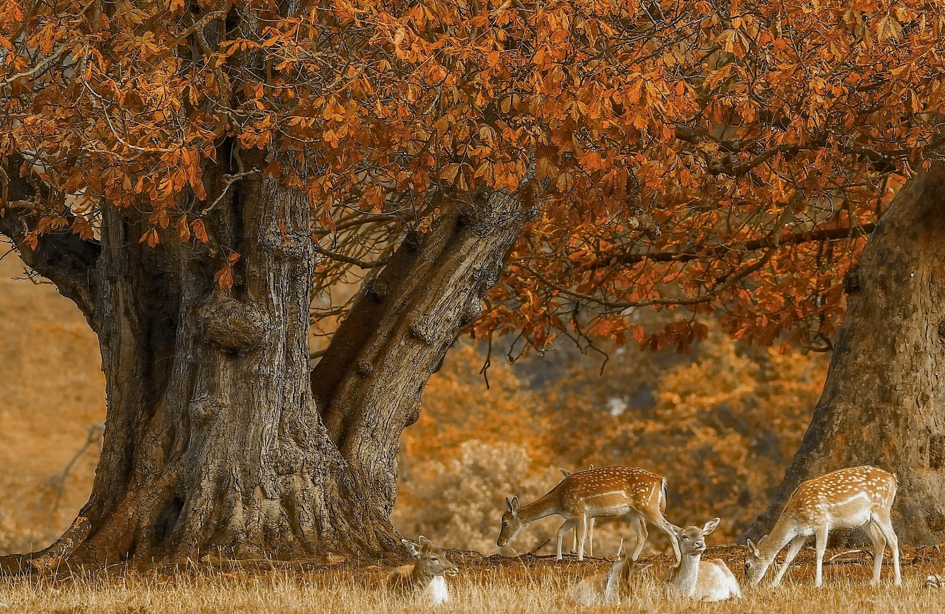 Fall Desktop Wallpaper Widescreen Cerf Full Hd Fond D 233 Cran And Arri 232 Re Plan 2048x1331