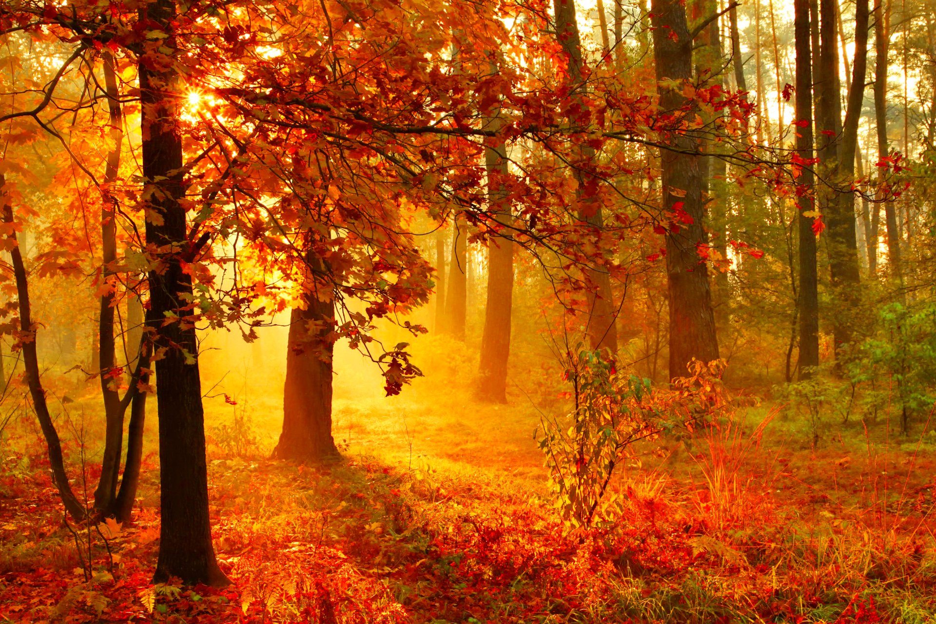 Fall Widescreen Wallpaper Sunset In Misty Autumn Forest Hd Wallpaper Background