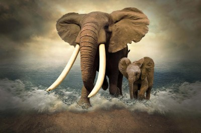 Mother Elephant and Her Cub HD Wallpaper | Background Image | 2048x1366 | ID:870285 - Wallpaper ...