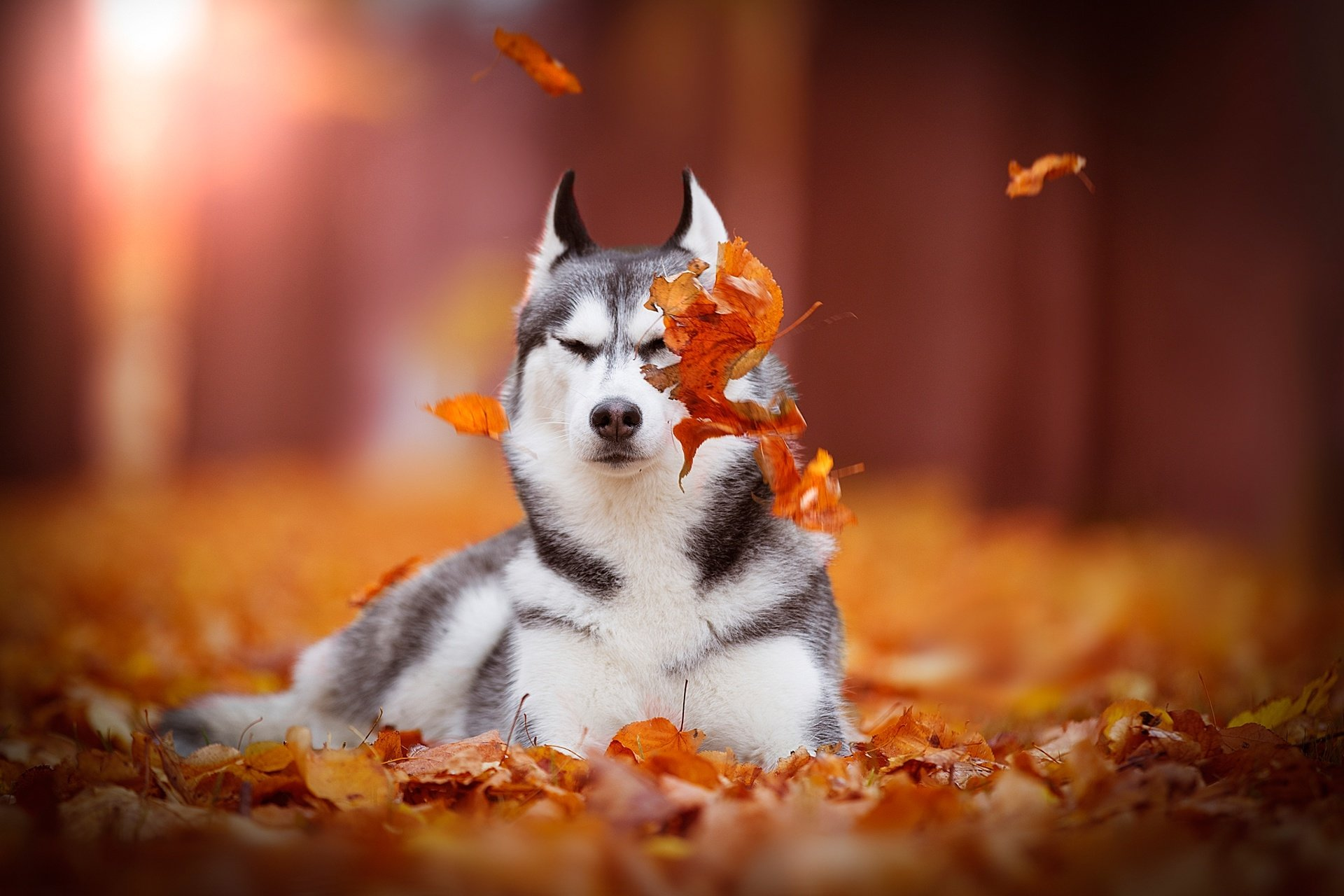 Free Wallpapers Of Cute Teddy Bears Husky Hd Wallpaper Background Image 1920x1280 Id