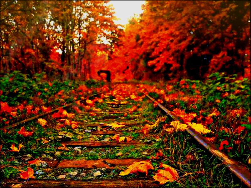 Pure Michigan Fall Wallpaper Autumn ☆ Autumn Wallpaper 32330805 Fanpop
