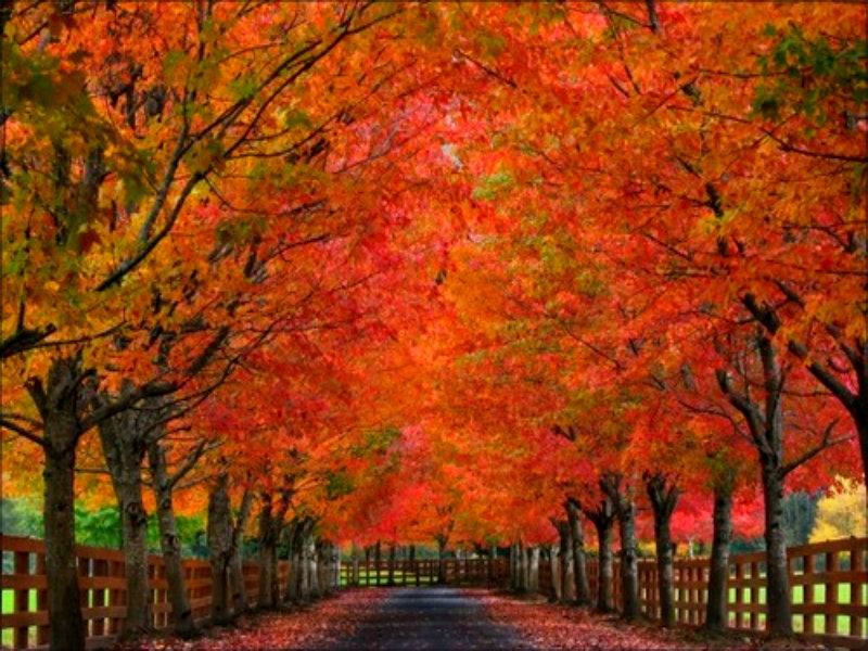 Vermont Fall Wallpaper Autumn ☆ Autumn Wallpaper 32377302 Fanpop