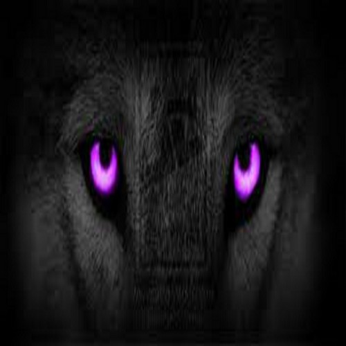 Black Cat Eyes Wallpaper Wolf Lovers Place Images Wolf Purple Hd Wallpaper And