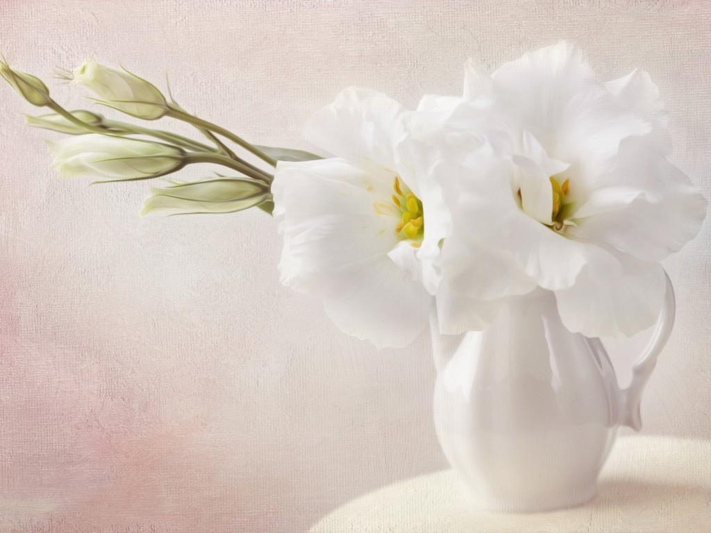 Single Rose Wallpaper Hd White Flowers Flowers Wallpaper 33698248 Fanpop