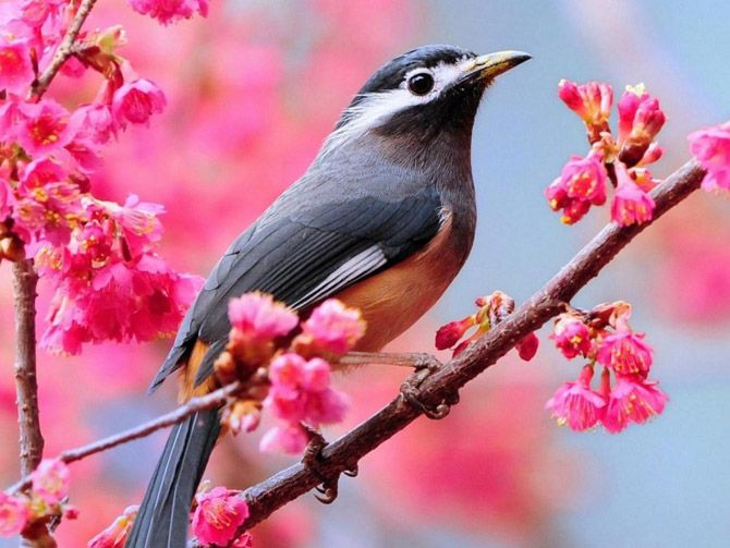 Spring images beautiful bird wallpaper and background photos (33876232)