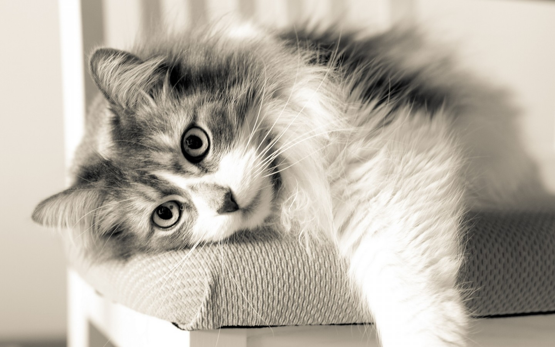 Cute Little Kitten Desktop Wallpapers Cat Cats Wallpaper 34758658 Fanpop