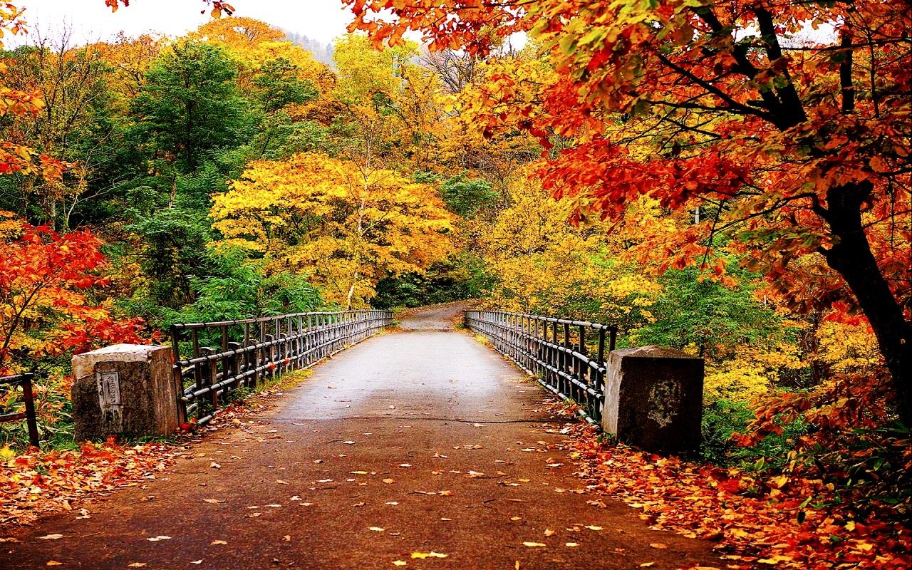 Free Fall Season Wallpaper Autumn Wallpaper Autumn Wallpaper 35867750 Fanpop