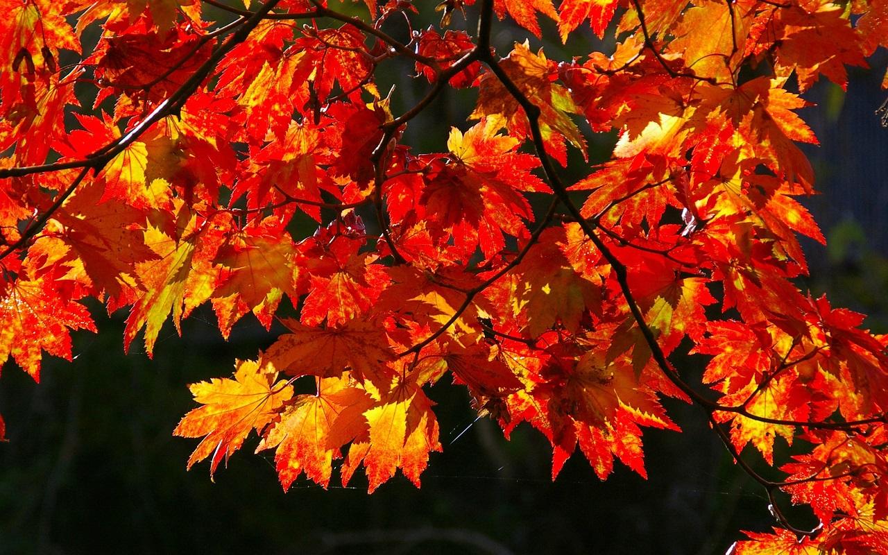 4k Fall Wallpaper For Phone Autumn Wallpaper Autumn Wallpaper 35867775 Fanpop