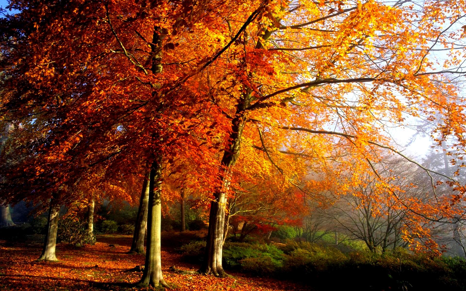 Free Widescreen Wallpaper Fall Autumn Scenery Random Photo 35926731 Fanpop