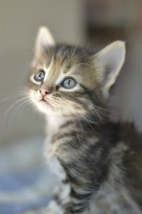 Wallpaper So Freakin Cute Cats Cute Little Kitten Cats Photo 36360540 Fanpop