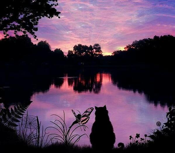Cute Fairy Wallpaper Download Beautiful Landscapes Images A Cat Staring At A Lake