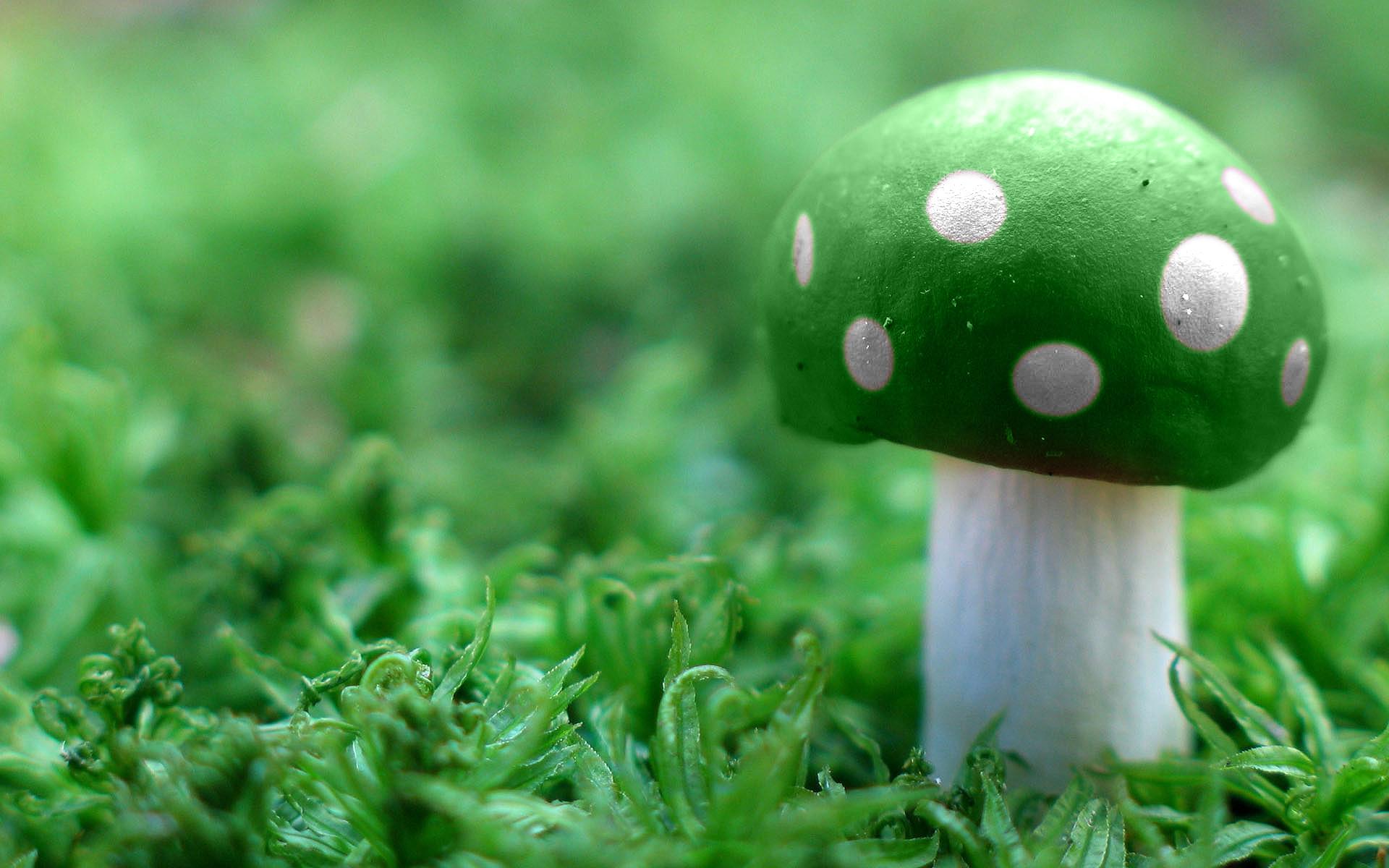 Wallpaper Monster Inc 3d Green Images Green Mushroom Hd Wallpaper And Background