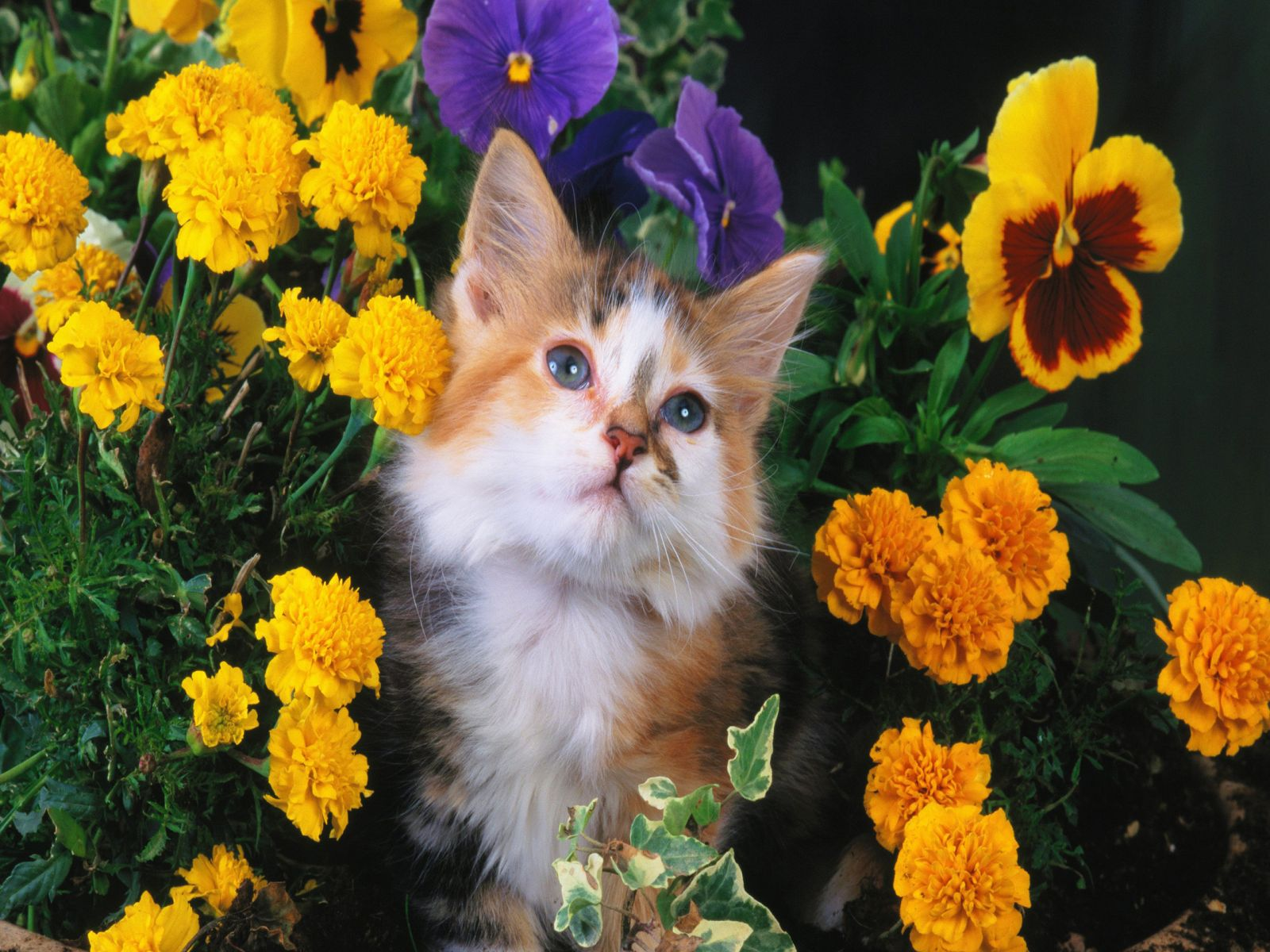 Wallpaper So Freakin Cute Cats Cat With Flowers Wallpaper Cats Wallpaper 36915309