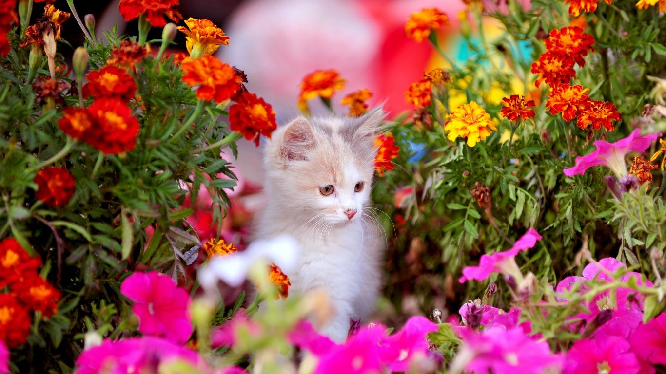 Wallpaper So Freakin Cute Cats Kitten With Flowers Cats Photo 36923880 Fanpop