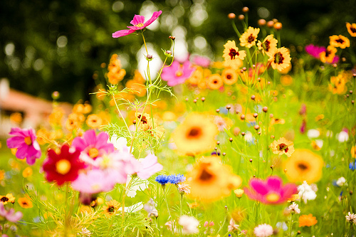 Spring images Bursting wallpaper and background photos (37265783) - photo of spring