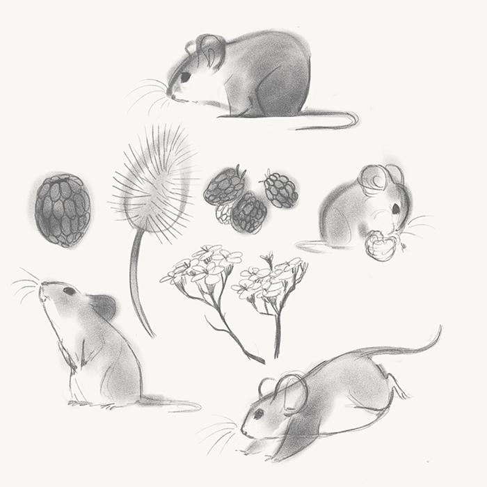 EgoMouse images Cute mice sketches wallpaper and background photos