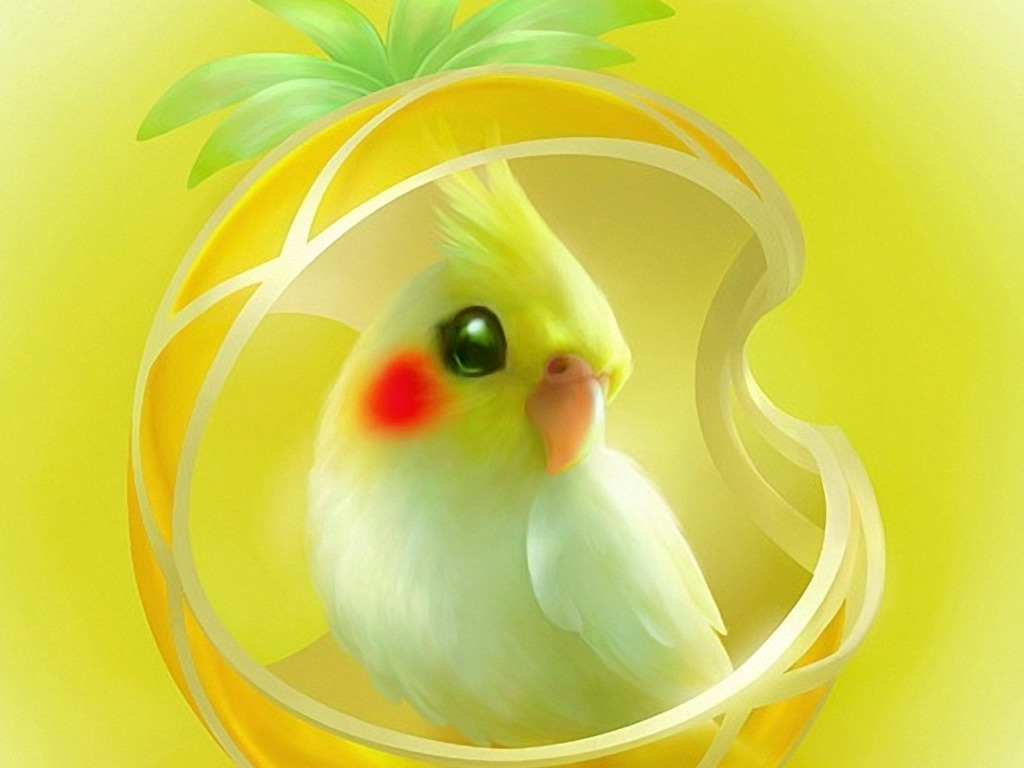 Cute Cartoon Bird Wallpapers Cockatiels Images Cockatiel Hd Wallpaper And Background