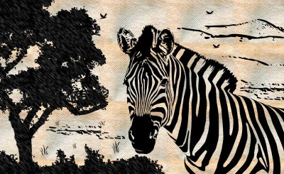 zebra drawing Wallpaper and Background Image | 1790x1100 | ID:326272 - Wallpaper Abyss