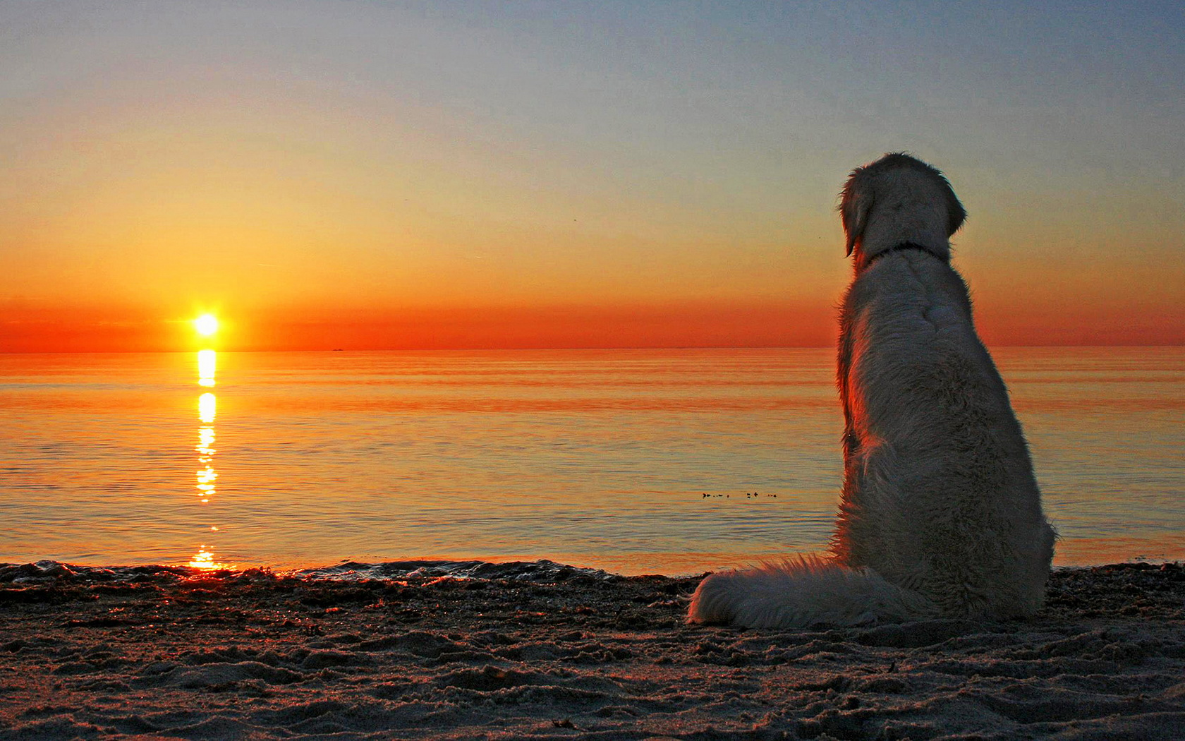 Cute Dog Wallpapers Fot Google Golden Retriever Wallpaper And Background Image