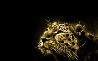 Leopard Full HD Wallpaper and Background Image | 1920x1200 | ID:394950