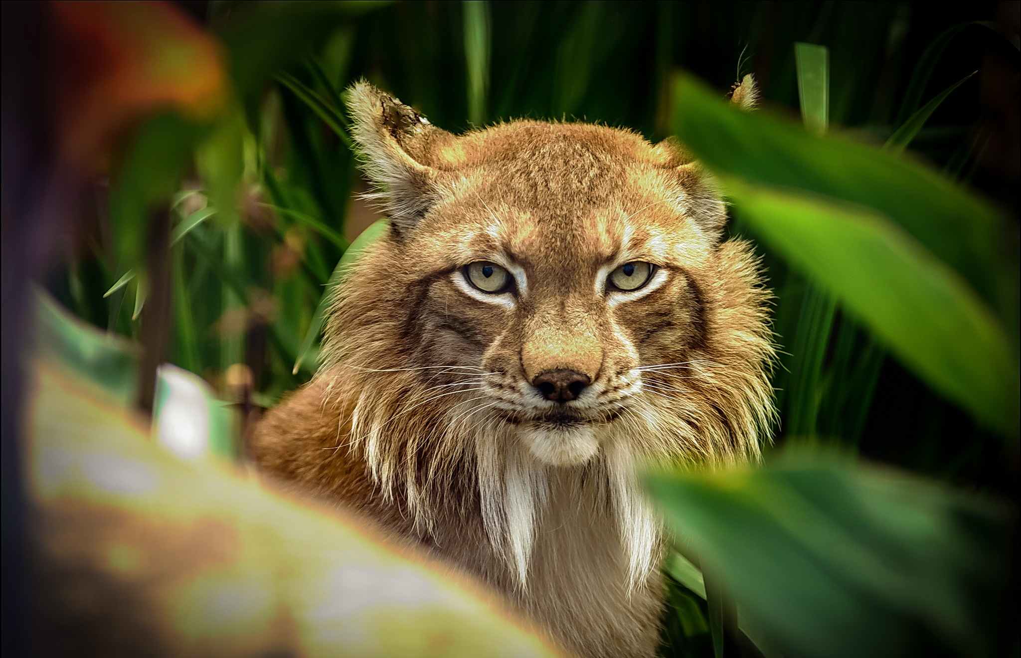 Hd Cute Kitten Wallpaper Lynx Hd Wallpaper Background Image 2048x1320 Id