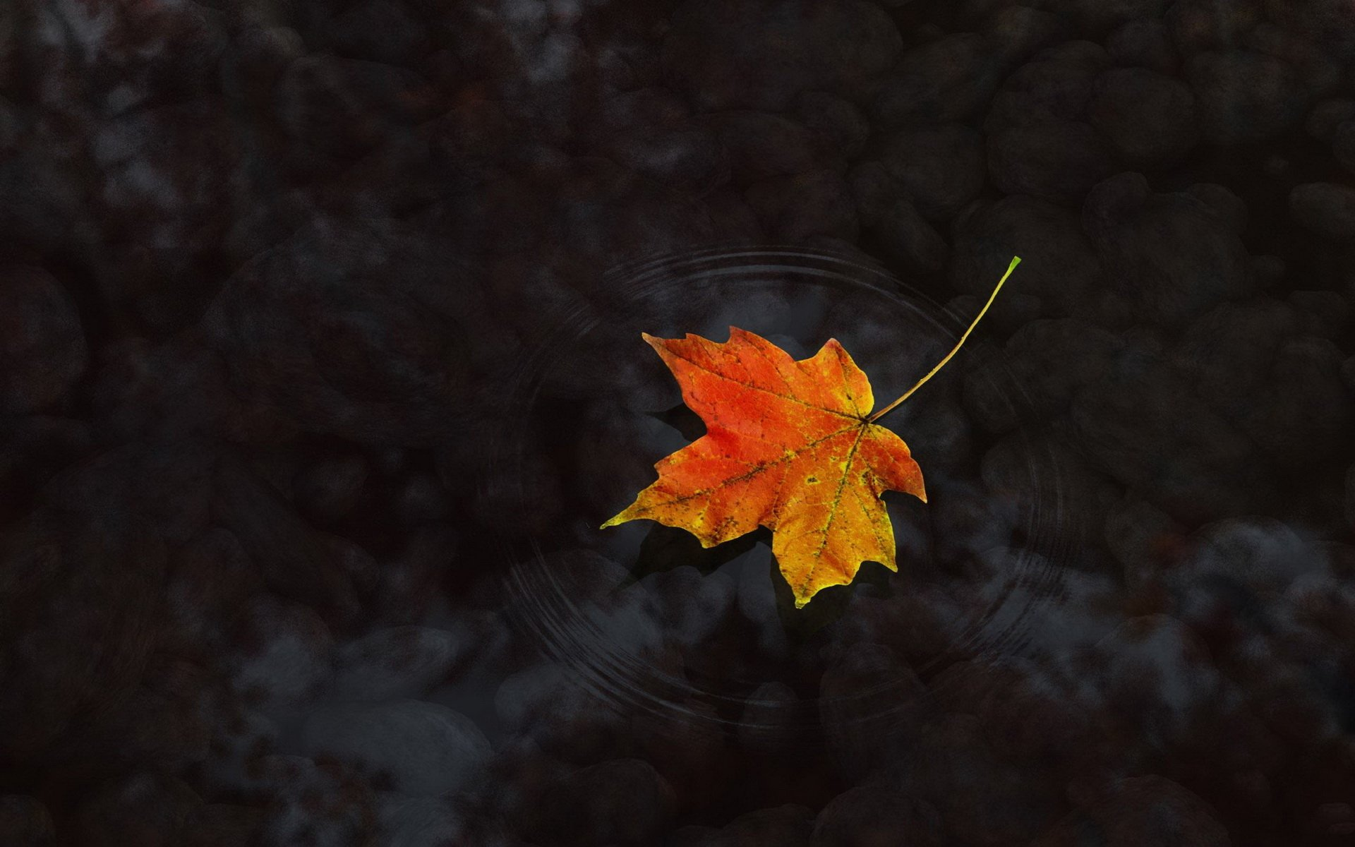 Rustic Fall Desktop Wallpaper Maple Leaf On Water Full Hd Wallpaper And Background Image