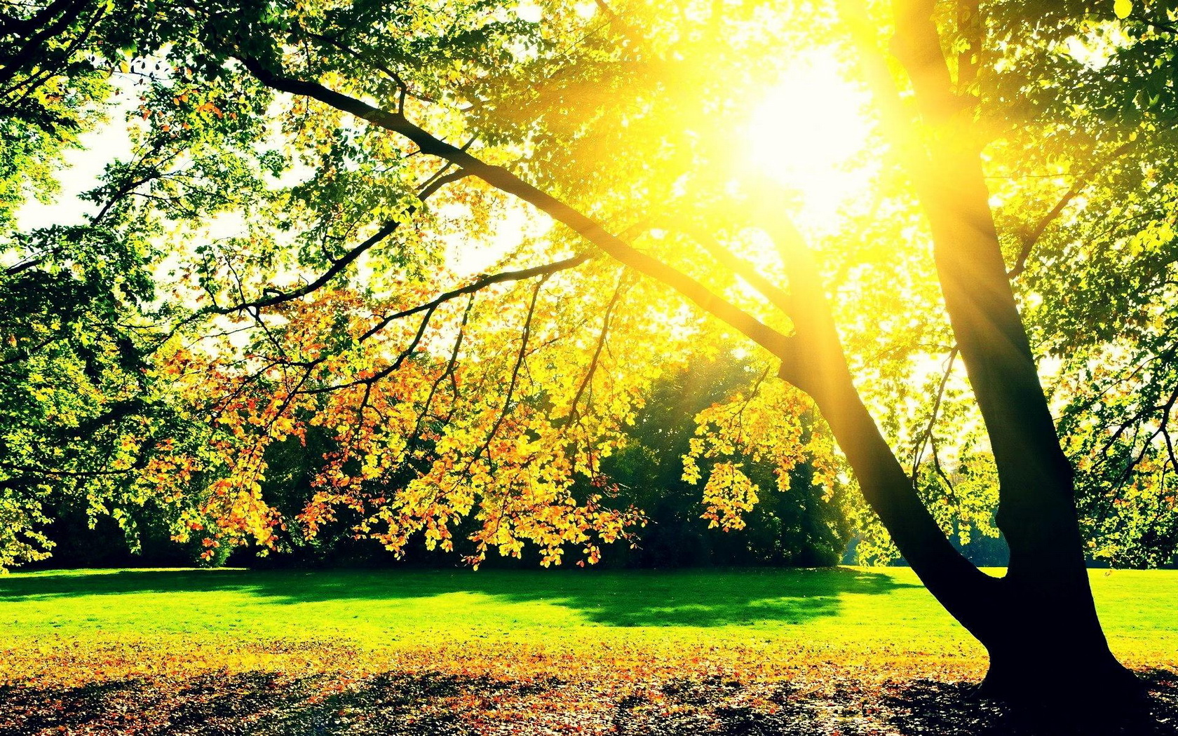 Hd Widescreen Fall Wallpaper Autumn Sunrise Wallpaper And Background Image 1680x1050