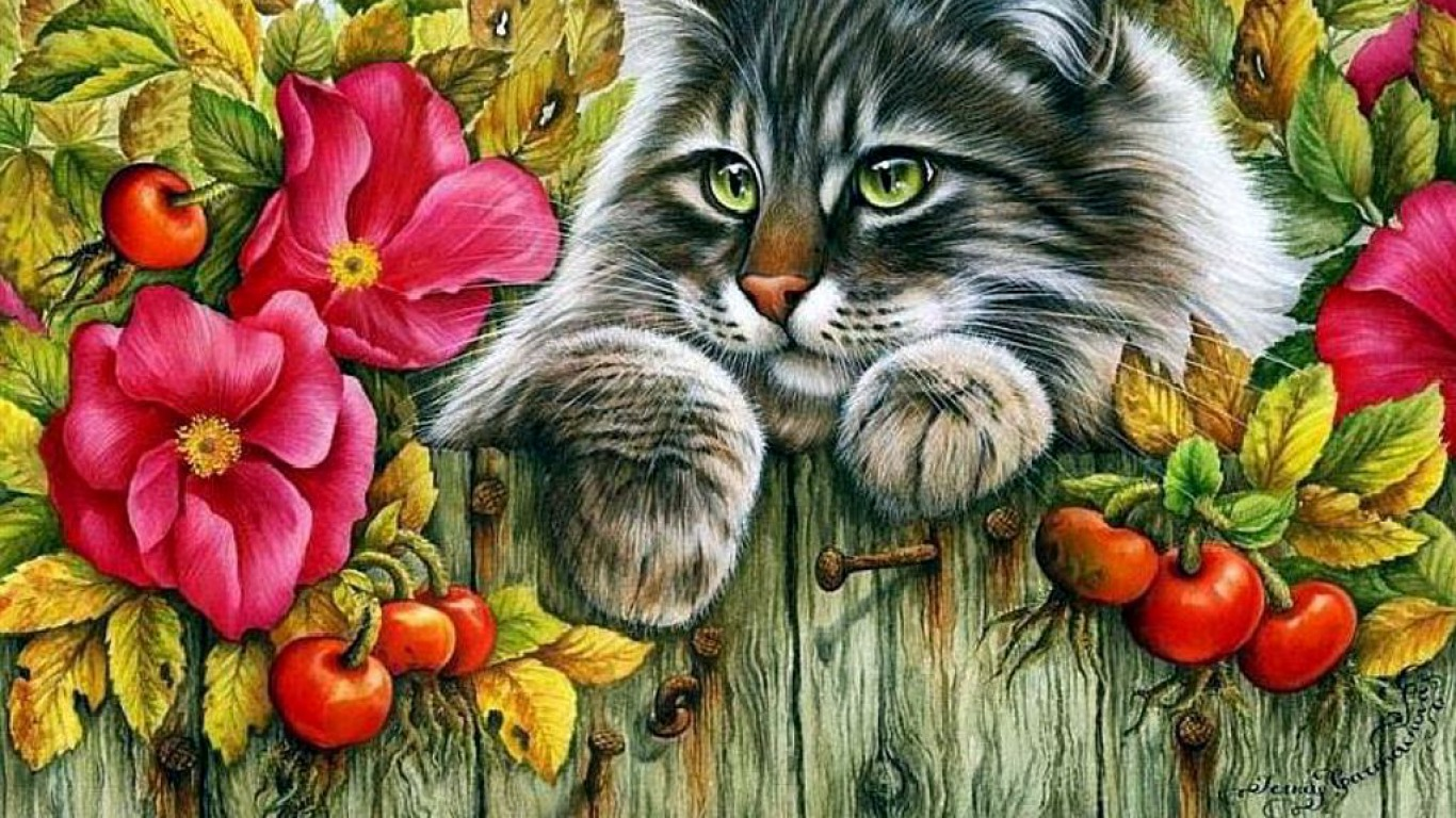 Cute Little Kitten Desktop Wallpapers Cat On A Fence Wallpaper And Background Image 1366x768