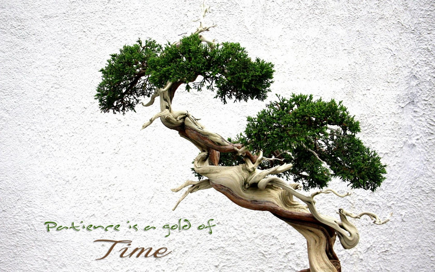 Bonsai Aarde Bonsai Wallpaper And Achtergrond 1680x1050 Id 424688