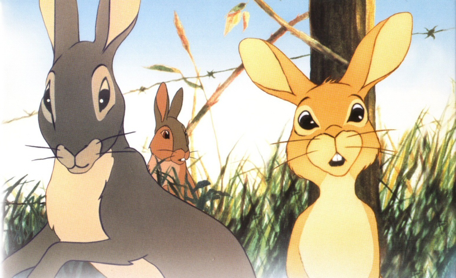 Political Anime Girl Wallpaper 6 Watership Down Hd Wallpapers Background Images