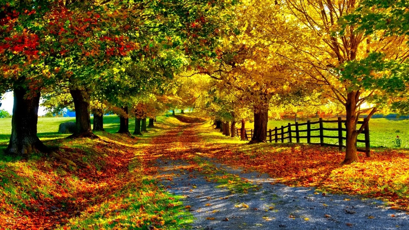 Iphone 7 Plus Hd Wallpapers Reddit Autumn Path Wallpaper And Background Image 1366x768 Id