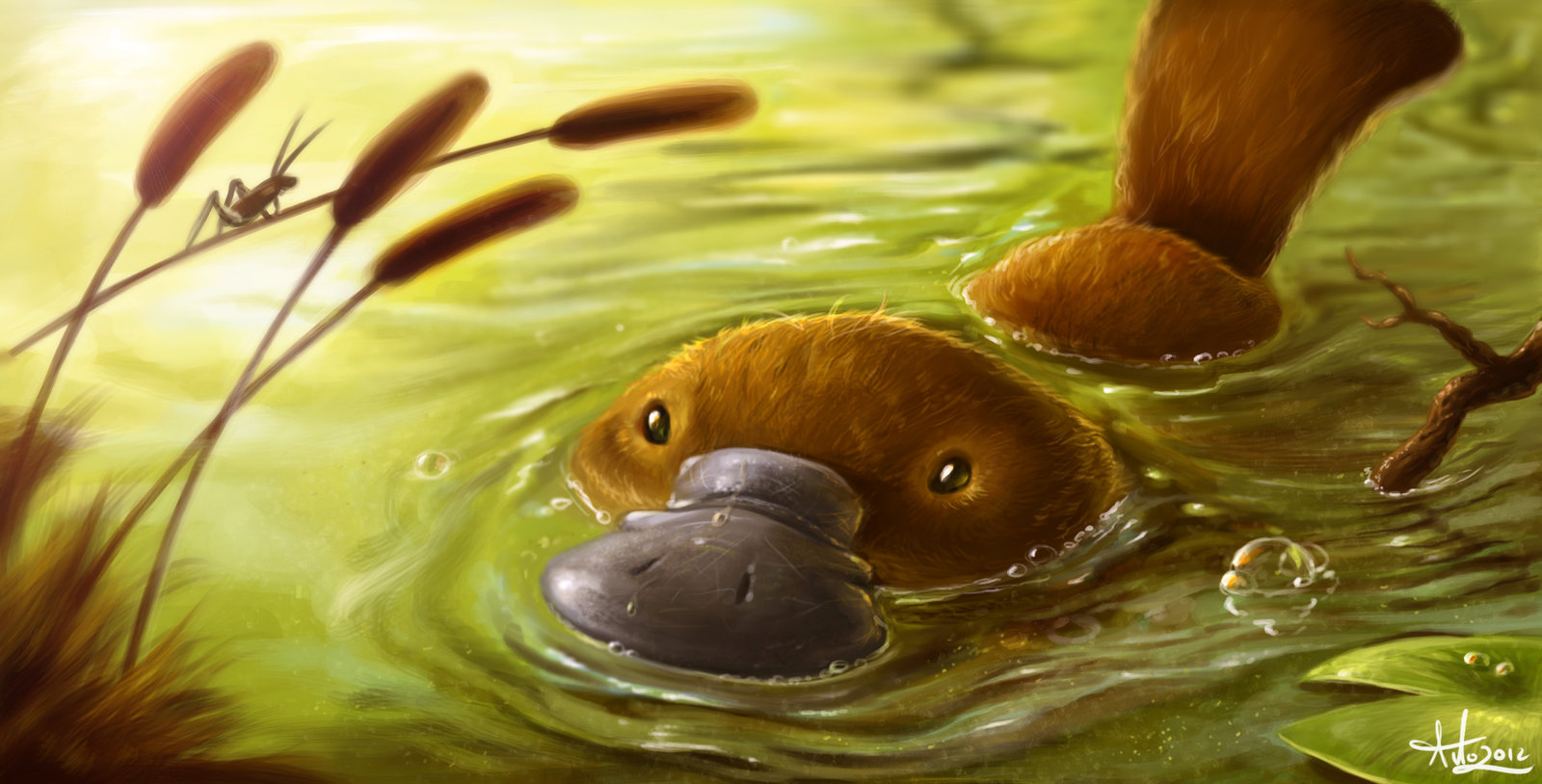 Hunting Iphone Wallpaper Platypus Wallpaper And Background Image 1600x814 Id 441639