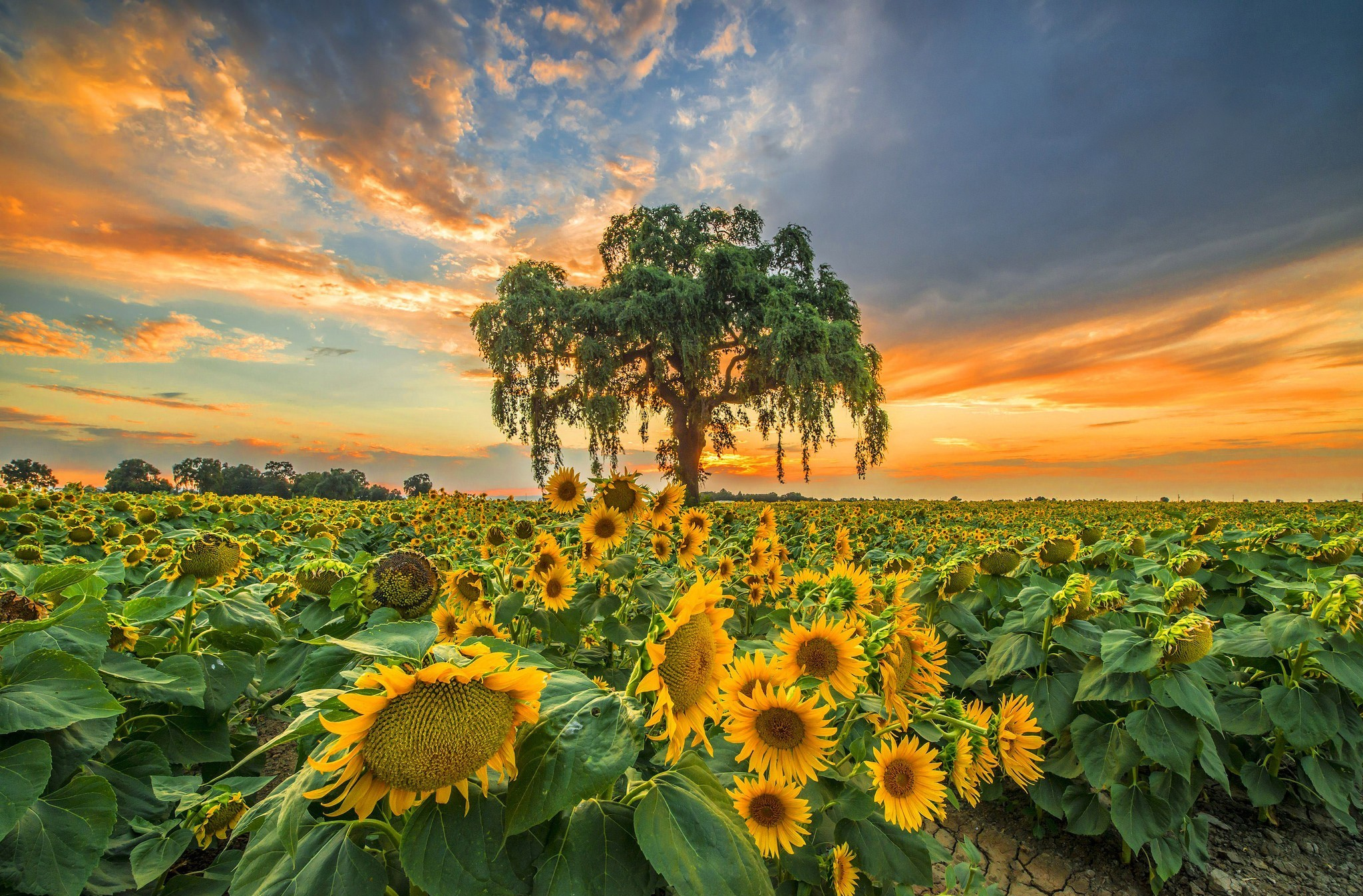 Wallpaper Fall Farmhouse Sunflower Full Hd Wallpaper And Background Image