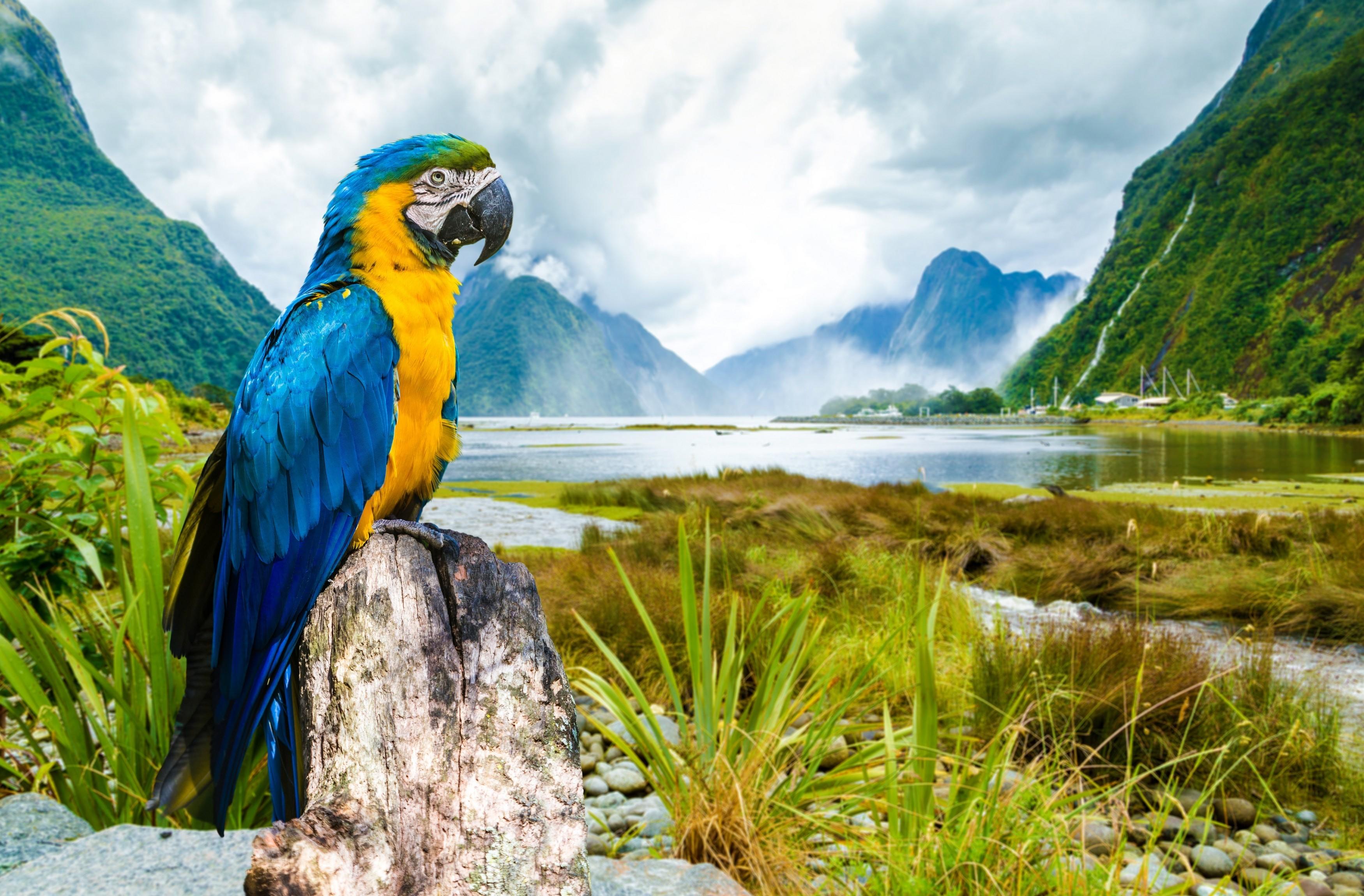 Vista Wallpaper Hd Guacamayo Azul Y Amarillo Full Hd Fondo De Pantalla And