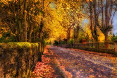 Autumn in Lenzie 5k Retina Ultra HD Wallpaper and Background | 6000x4000 | ID:588561