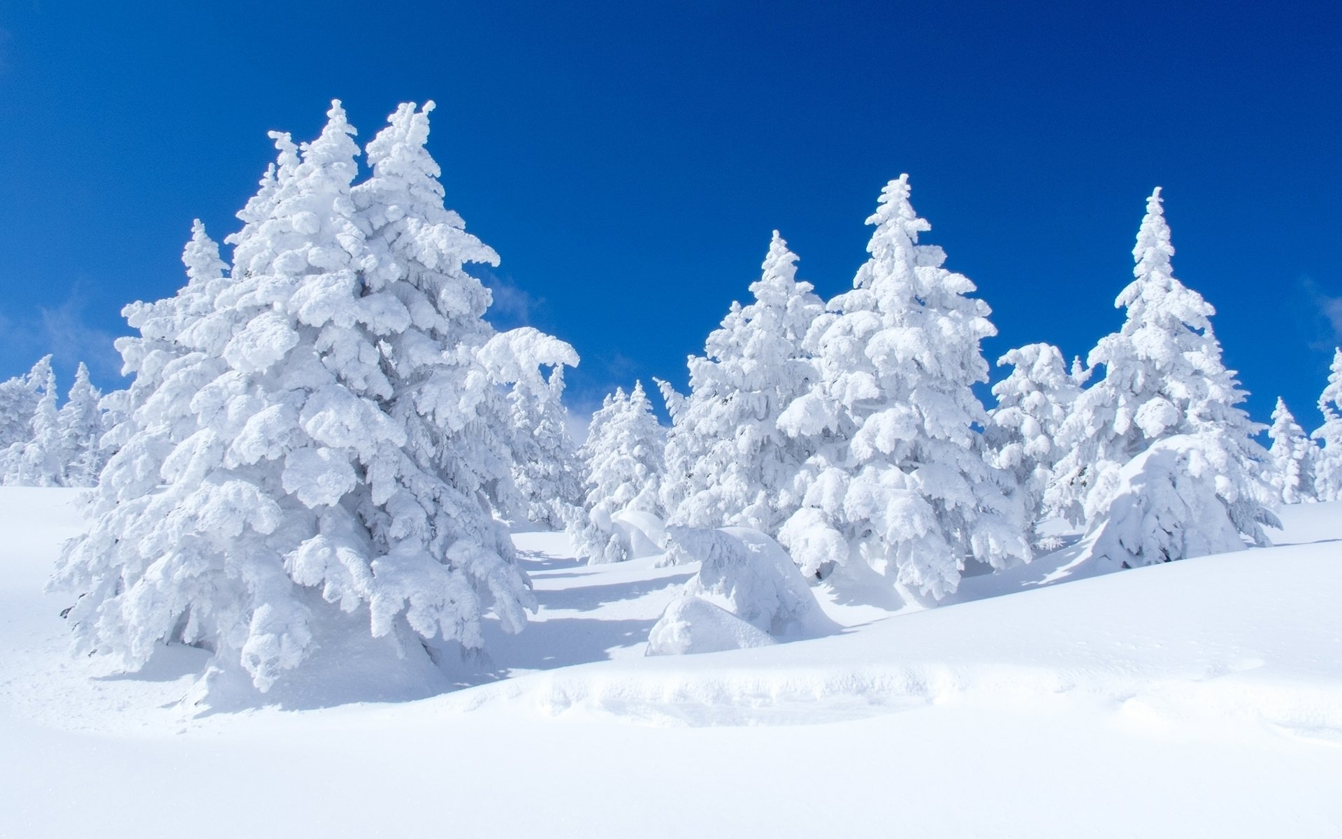 Iphone 7 Wallpaper Pinterest Snow Covered Pine Trees Full Hd Wallpaper And Background