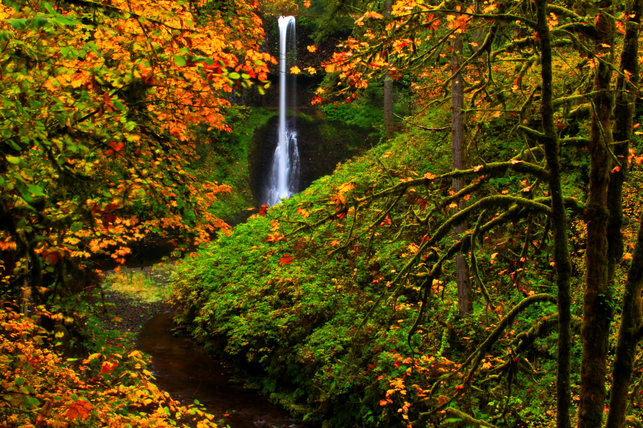 Iphone Wallpaper Waterfall Silver Falls State Park Oregon In Autumn Hd Wallpaper