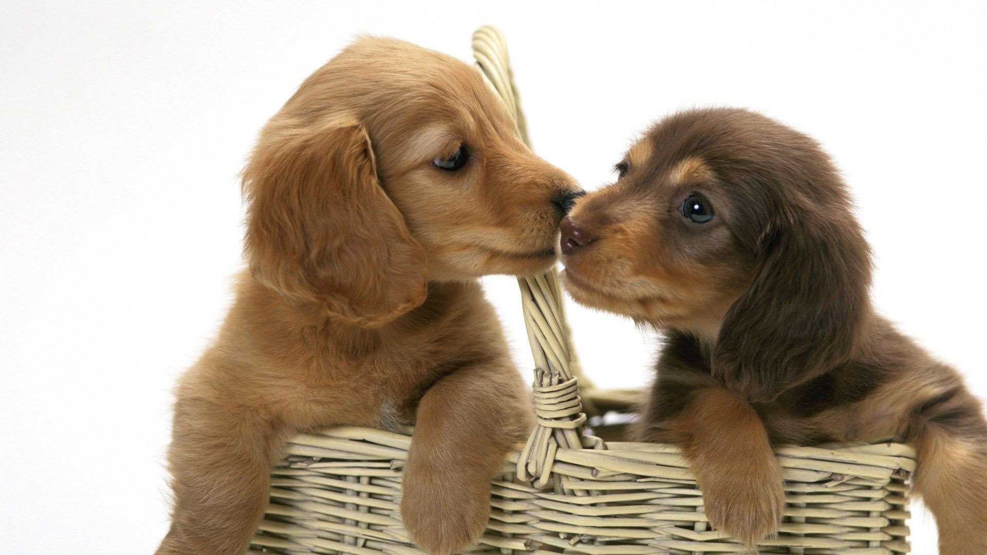 Cute Puppies Wallpaper Backgrounds Kissing Puppies Full Hd Fond D 233 Cran And Arri 232 Re Plan