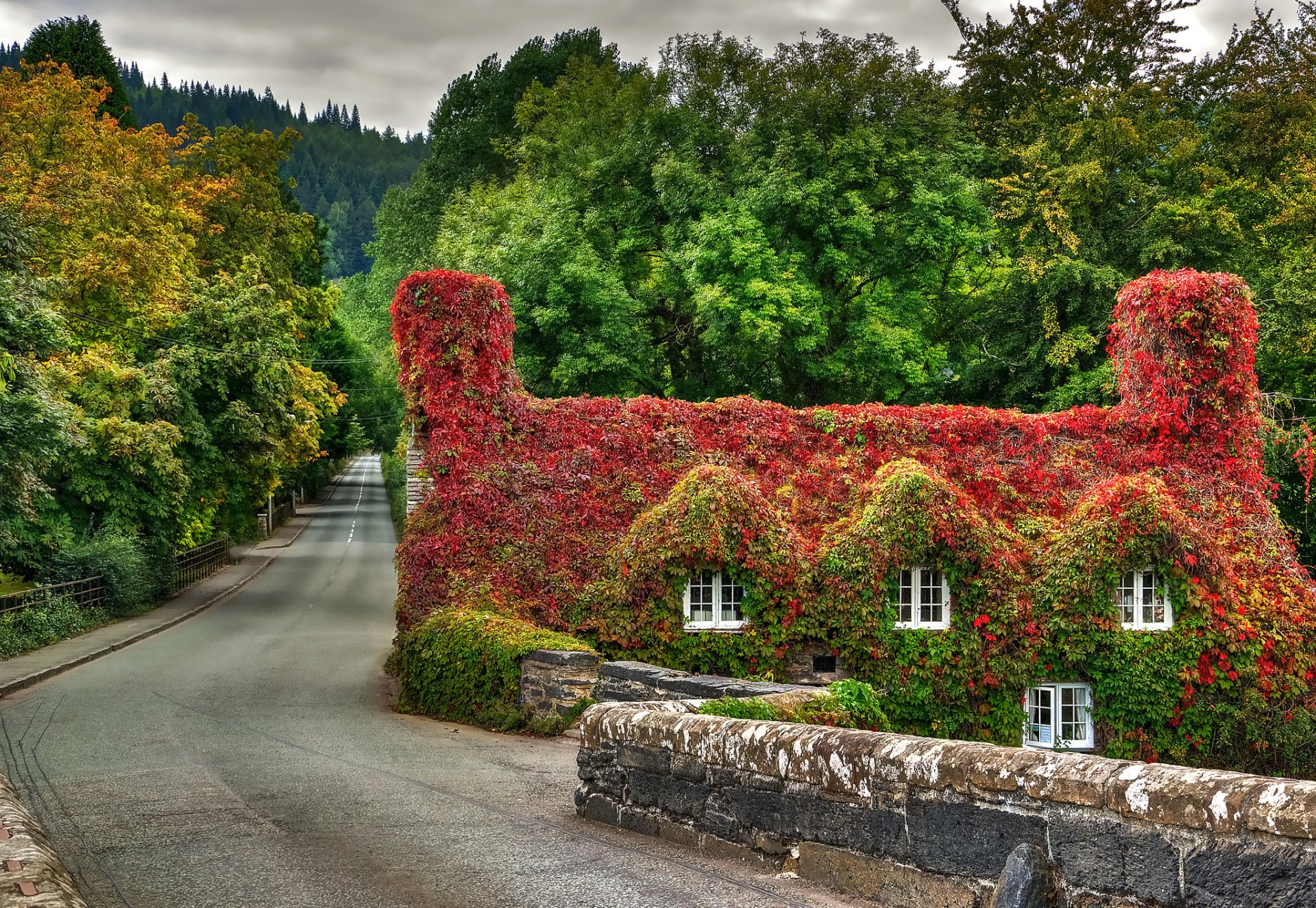 Fall Leaf Wallpaper For Mobile House In Wales Covered By Ivy Hd Wallpaper Background