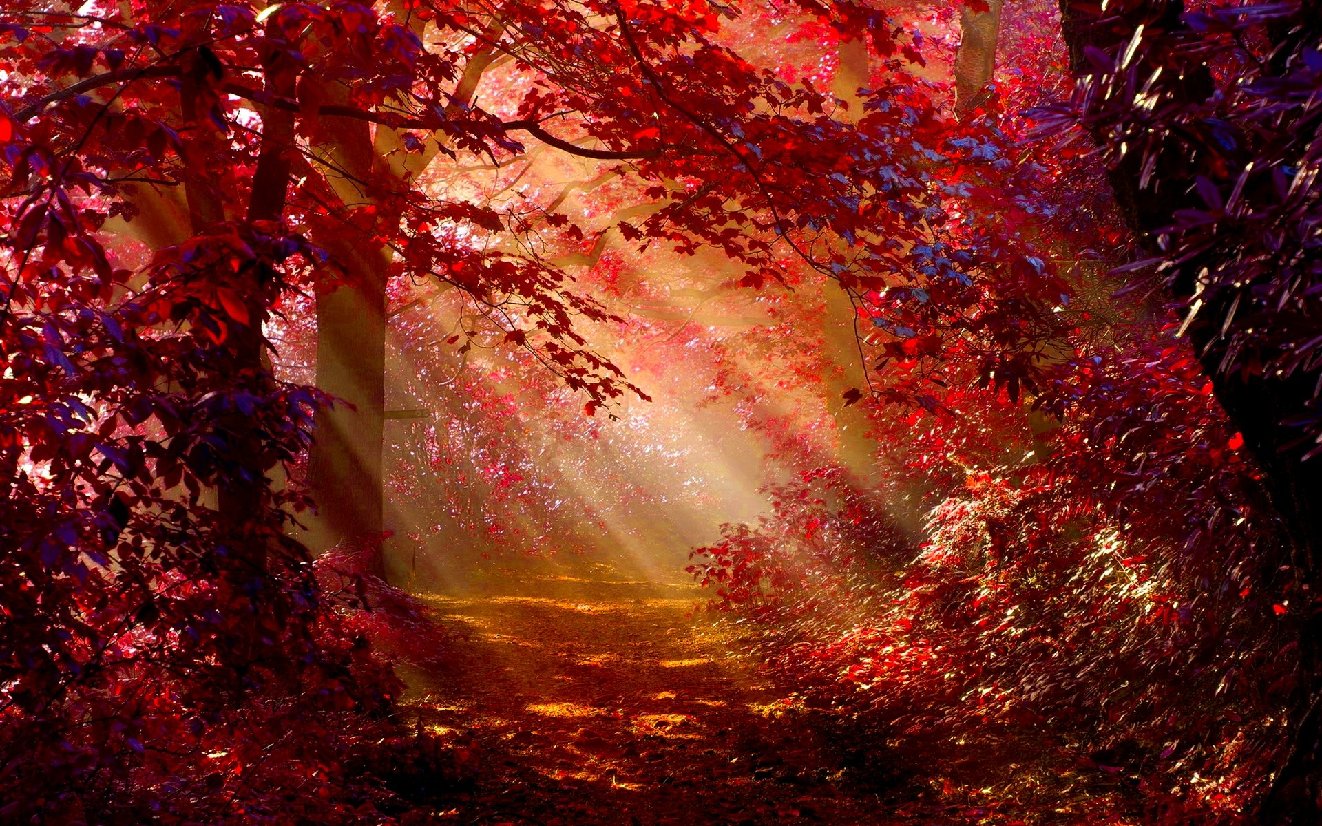 Fall Leaves Pathway Computer Wallpaper Sunlight In Autumn Forest Full Hd Wallpaper And Background