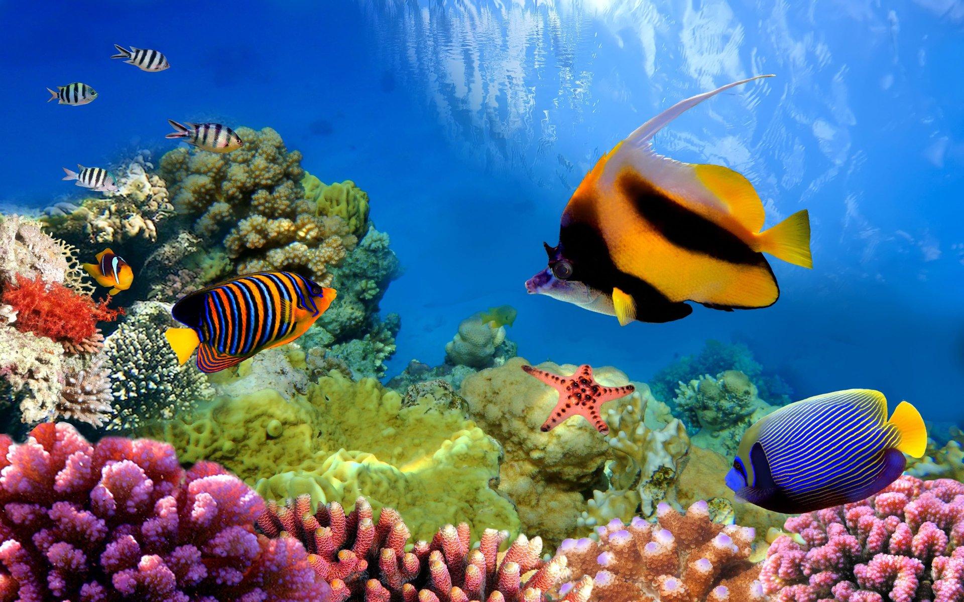 Iphone 7 Plus Hd Wallpaper Original Underwater In The Great Barrier Reef 4k Ultra Hd Wallpaper
