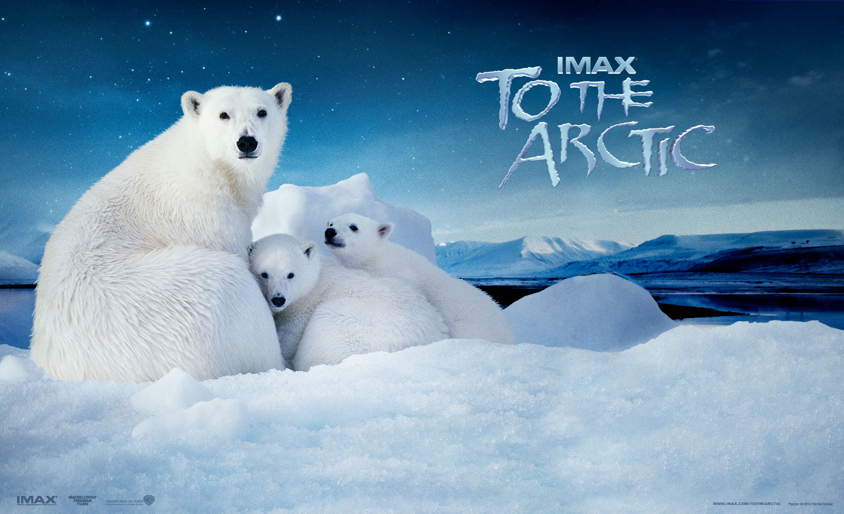 Cute Xmas Wallpapers Free 10 To The Arctic Hd Wallpapers Backgrounds Wallpaper Abyss