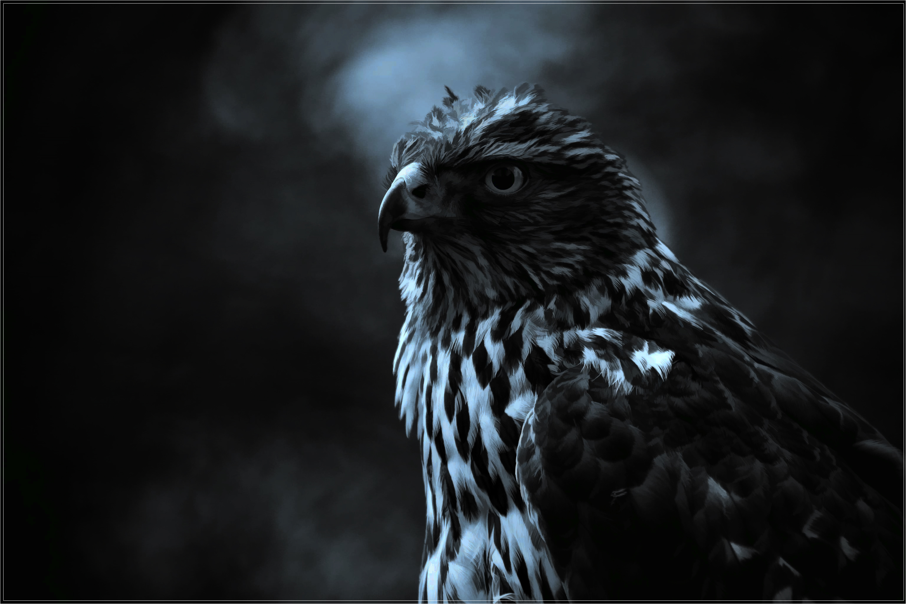 D Hd Wallpapers 1366x768 Painted Hawk Full Hd Wallpaper And Background 3072x2048