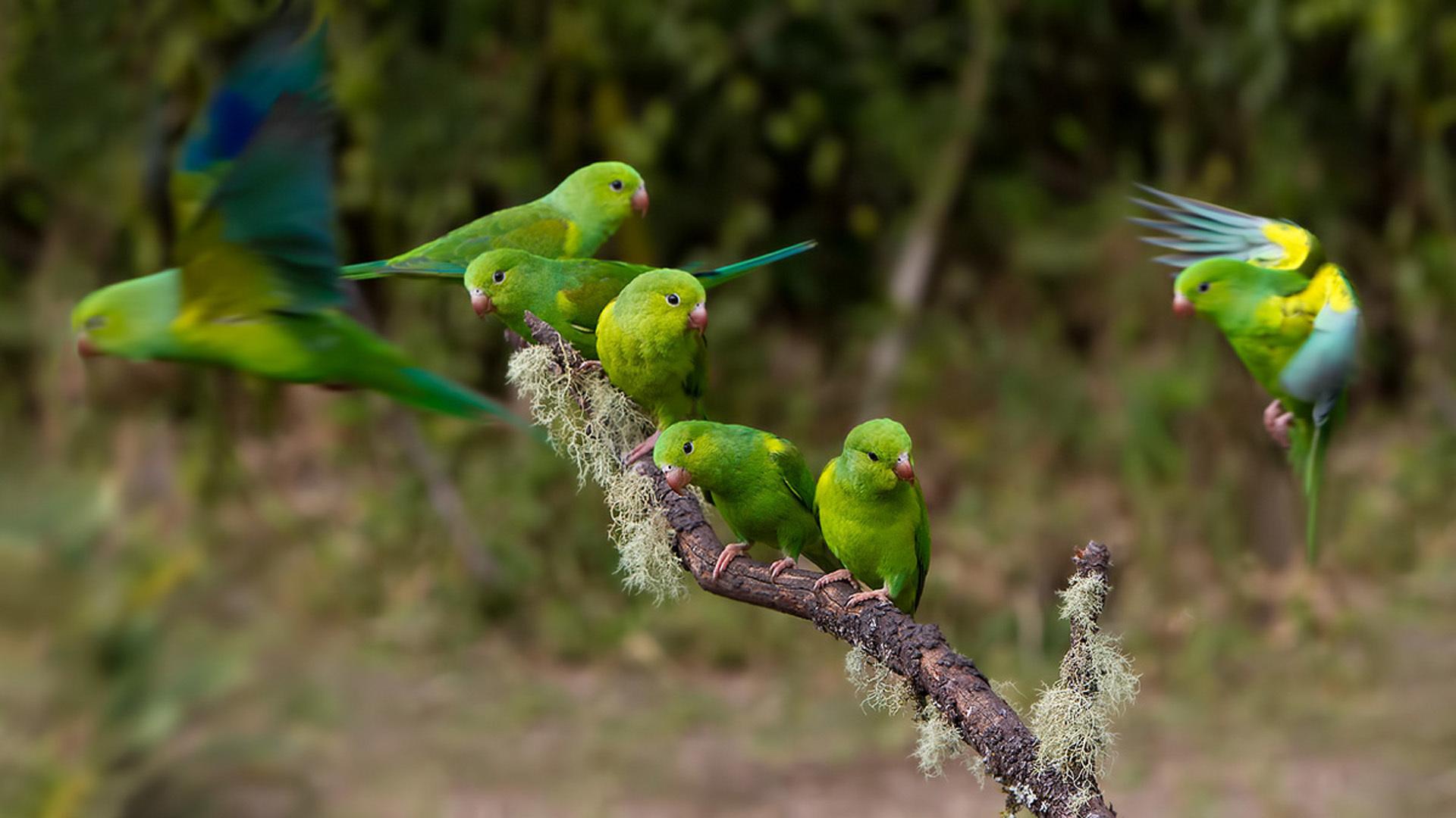 Cute Parakeet Wallpaper 135 Parrot Hd Wallpapers Backgrounds Wallpaper Abyss