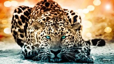 192 Jaguar HD Wallpapers | Backgrounds - Wallpaper Abyss